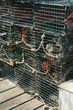 Detalle, desvíos de la langosta Fotos de archivo
