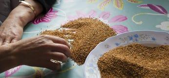 Detalle el tiro de una mano de los womanque separa las malas semillas imágenes de archivo libres de regalías