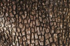 Detalle en el árbol Fotos de archivo libres de regalías