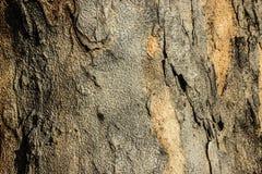 Detalle en el árbol Imagen de archivo libre de regalías