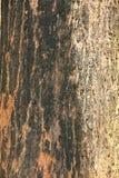 Detalle en el árbol Fotos de archivo