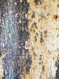 Detalle en el árbol Fotografía de archivo
