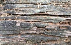 Detalle en el árbol Foto de archivo
