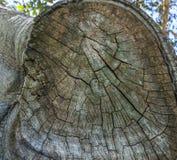 Detalle en el árbol Fotografía de archivo libre de regalías