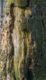 Detalle en el árbol Foto de archivo libre de regalías