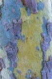 Detalle en el árbol Imágenes de archivo libres de regalías