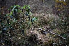 Detalle en el bosque imagenes de archivo