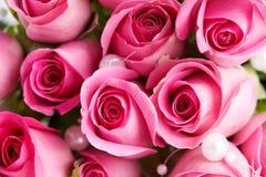 Detalle en las rosas rosadas Imagen de archivo