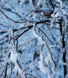 Detalle en nieve Fotos de archivo