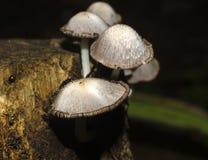 Detalle fungoso de madera Fotografía de archivo libre de regalías