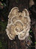 Detalle fungoso de madera imagen de archivo