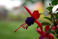 Detalle inusual de la flor Foto de archivo libre de regalías
