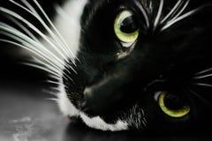 Detalle la imagen macra de un gato negro con los ojos verdes Foto de archivo libre de regalías