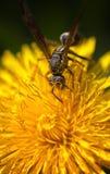 Detalle macro del ojo de la avispa Fotografía de archivo libre de regalías