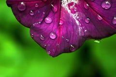 Detalle púrpura de la flor Imágenes de archivo libres de regalías