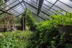 detalle que cultiva un huerto abandonado fotografía de archivo