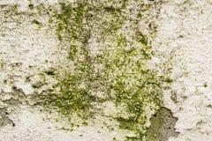 Detalle quebrado de la pared Imagen de archivo libre de regalías