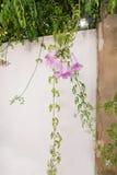 Detalle rosado de la pared de la flor fotos de archivo