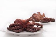 Detalle sano del marisco - pulpo Imagen de archivo libre de regalías
