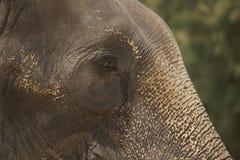 Detalle triste del fondo de la falta de definición del ojo del elefante foto de archivo