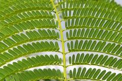 Detalle tropical del modelo del helecho Imagen de archivo
