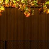 Detalle urbano del otoño de la naturaleza Fotografía de archivo