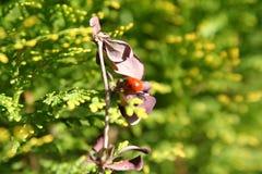 Detalle y flores de la rama de árbol con una mariquita en sunligh imagen de archivo