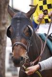 Detalle y jinete del caballo de raza listos para correr Fotografía de archivo libre de regalías