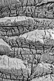 Detalle y textura de la corteza de palmera Imagen de archivo