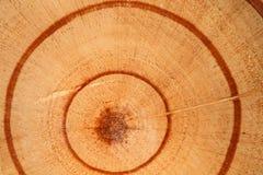 Detalle y textura de madera del corte Fotos de archivo libres de regalías