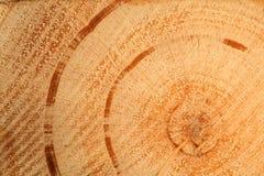 Detalle y textura de madera del corte Imagen de archivo libre de regalías