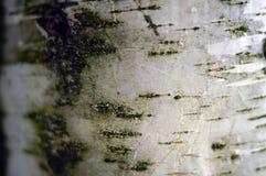 Detalles blancos de la corteza Fondo, modelo o textura de la corteza Imagen de archivo libre de regalías