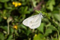 Detalles de la fauna Fotos de archivo libres de regalías