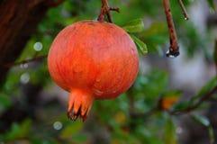 Detalles de la fruta roja Foto de archivo