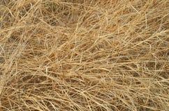 Detalles de la hierba seca en naturaleza Foto de archivo libre de regalías