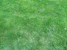 Detalles de la hierba verde Foto de archivo