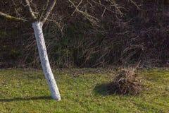 Detalles de la hora del Este en el campo rural en Alemania del sur Fotografía de archivo
