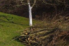 Detalles de la hora del Este en el campo rural en Alemania del sur Fotos de archivo libres de regalías