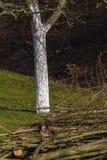 Detalles de la hora del Este en el campo rural en Alemania del sur Imagenes de archivo