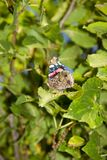 Detalles de la macro del insec de la naturaleza de la mariposa Foto de archivo