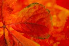 Detalles de las hojas de un otoño Imagen de archivo libre de regalías