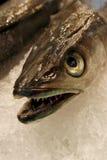 Detalles de los pescados frescos sin procesar, primer Imagenes de archivo