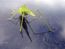 Detalles de un insecto Foto de archivo libre de regalías