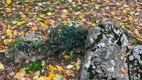 Detalles de una roca y la tierra cubierta por las hojas Foto de archivo libre de regalías
