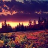 Detalles del bosque de la puesta del sol Imagenes de archivo