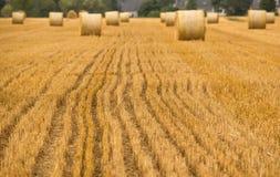 Detalles del campo de la agricultura Foto de archivo libre de regalías