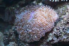 Coral y rocas del mar Foto de archivo