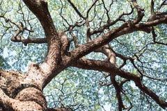 Detalles del fondo verde del follaje del árbol de la hoja y de la rama Imagenes de archivo