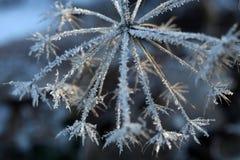 Detalles del invierno Fotografía de archivo libre de regalías