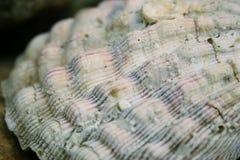 Detalles del shell Imagenes de archivo